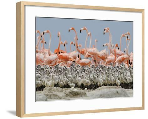 Parents leave their young in a creche and go in search of food.-Klaus Nigge-Framed Art Print