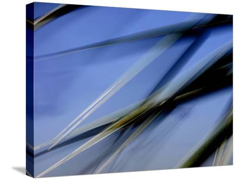 Flash Fill Palm Frond Leaves Dance in Front of the Evening Sky-Raymond Gehman-Stretched Canvas Print