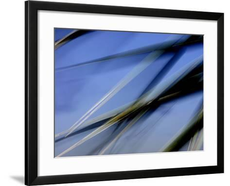 Flash Fill Palm Frond Leaves Dance in Front of the Evening Sky-Raymond Gehman-Framed Art Print