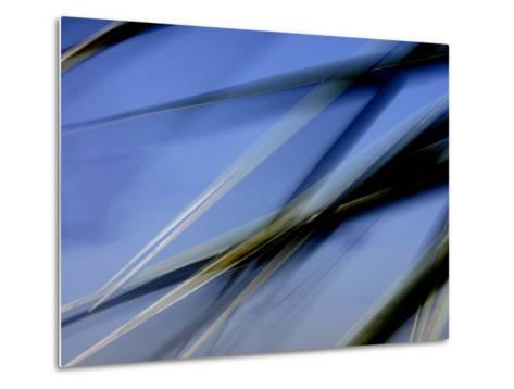 Flash Fill Palm Frond Leaves Dance in Front of the Evening Sky-Raymond Gehman-Metal Print