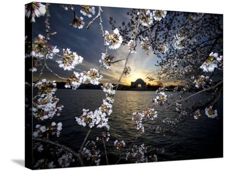 Jefferson Memorial at Dawn, and Cherry Blossoms at the Tidal Basin-Paul Sutherland-Stretched Canvas Print