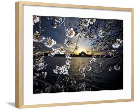 Jefferson Memorial at Dawn, and Cherry Blossoms at the Tidal Basin-Paul Sutherland-Framed Art Print