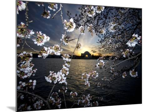 Jefferson Memorial at Dawn, and Cherry Blossoms at the Tidal Basin-Paul Sutherland-Mounted Photographic Print