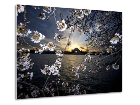 Jefferson Memorial at Dawn, and Cherry Blossoms at the Tidal Basin-Paul Sutherland-Metal Print