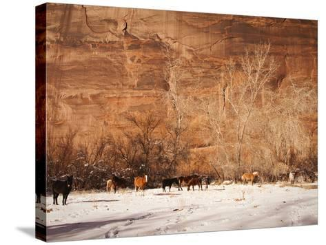 A Herd of Horses in a Snowy Landscape at the Bottom of a Cliff-James Forte-Stretched Canvas Print