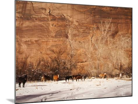 A Herd of Horses in a Snowy Landscape at the Bottom of a Cliff-James Forte-Mounted Photographic Print