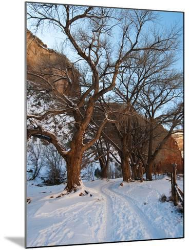 Tire Tracks in Snow Leading Up to Canyon De Chelly Cliffs-James Forte-Mounted Photographic Print