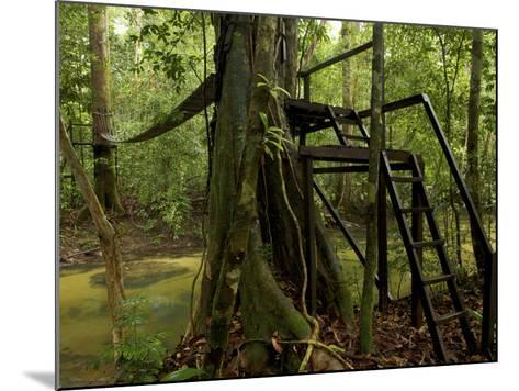 Suspension Bridge in Rain Forest at Cabang Panti Research Station-Tim Laman-Mounted Photographic Print