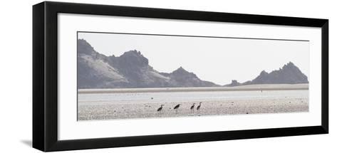 Shorebirds at Detwah Lagoon-Michael Melford-Framed Art Print