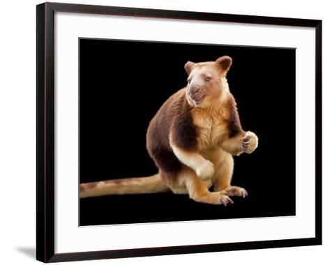 An Endangered Goodfellow's Tree-Kangaroo, Dendrolagus Goodfellowi-Joel Sartore-Framed Art Print