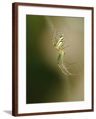 A Spider in its Silk Orb Web-Darlyne A^ Murawski-Framed Art Print