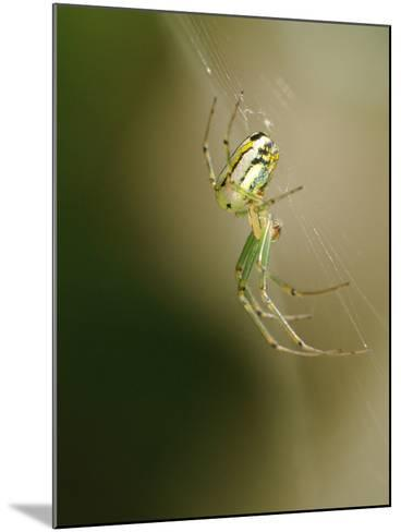 A Spider in its Silk Orb Web-Darlyne A^ Murawski-Mounted Photographic Print