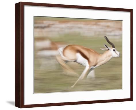 A Springbok, Antidorcas Marsupialis, Running Past a Herd-Roy Toft-Framed Art Print