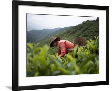 Picking Tea Leaves on a Puer Tea Estate in the Yunnan Province-Alex Treadway-Framed Art Print