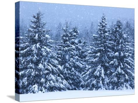 Snow Covered Trees in the High Peaks Region of Adirondack Park-Michael Melford-Stretched Canvas Print