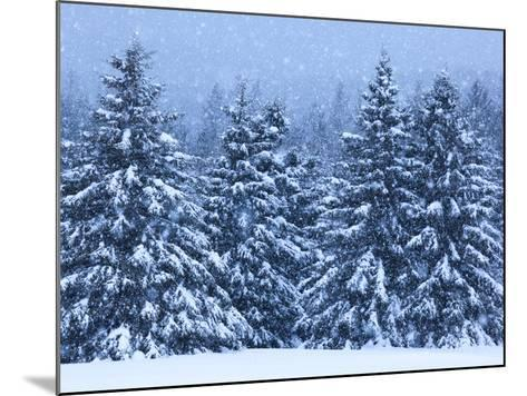 Snow Covered Trees in the High Peaks Region of Adirondack Park-Michael Melford-Mounted Photographic Print