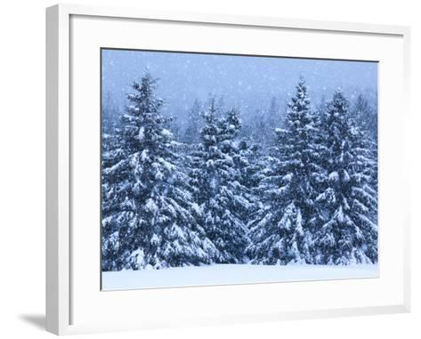 Snow Covered Trees in the High Peaks Region of Adirondack Park-Michael Melford-Framed Art Print