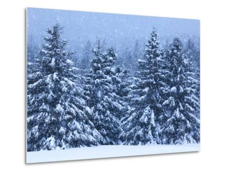 Snow Covered Trees in the High Peaks Region of Adirondack Park-Michael Melford-Metal Print