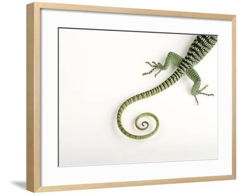 A Rosenberg's Monitor Tail, Varanus Rosenbergi, at the Fort Worth Zoo-Joel Sartore-Framed Art Print