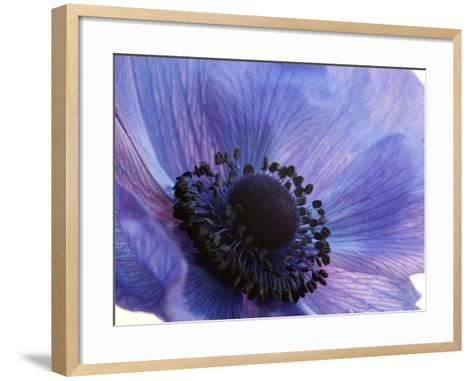 Close Up of a Blue Anemone Flower-Darlyne A^ Murawski-Framed Art Print