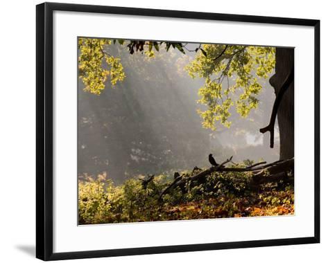 A Western Jackdaw, Corvus Monedula, in a Misty Autumn Landscape-Alex Saberi-Framed Art Print