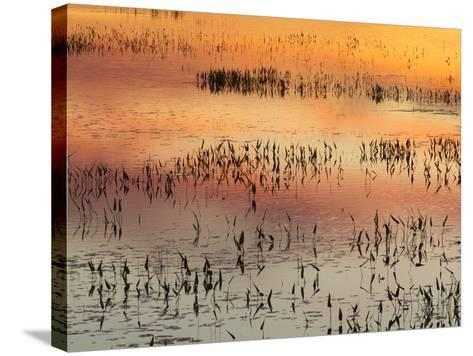 Sunset Reflections on Tupper Lake-Michael Melford-Stretched Canvas Print