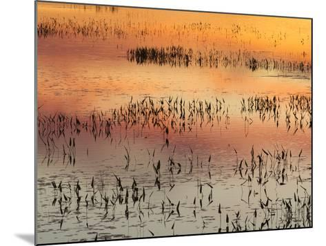 Sunset Reflections on Tupper Lake-Michael Melford-Mounted Photographic Print