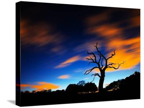 A Tree in Richmond Park at Night with Fast Moving Clouds-Alex Saberi-Stretched Canvas Print