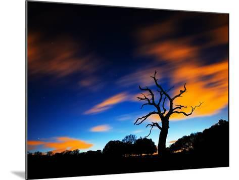 A Tree in Richmond Park at Night with Fast Moving Clouds-Alex Saberi-Mounted Photographic Print