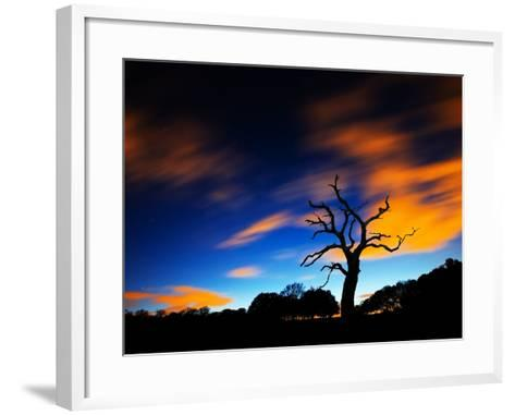 A Tree in Richmond Park at Night with Fast Moving Clouds-Alex Saberi-Framed Art Print