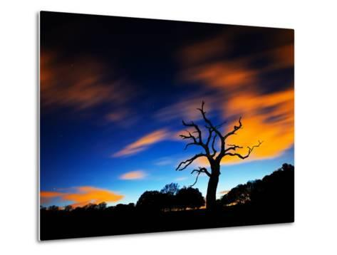 A Tree in Richmond Park at Night with Fast Moving Clouds-Alex Saberi-Metal Print