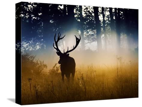 A Red Deer Buck, Cervus Elaphus, Comes Out from the Forest-Alex Saberi-Stretched Canvas Print