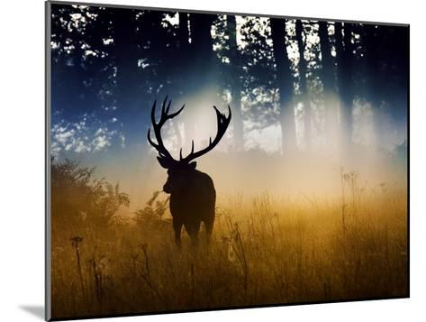 A Red Deer Buck, Cervus Elaphus, Comes Out from the Forest-Alex Saberi-Mounted Photographic Print