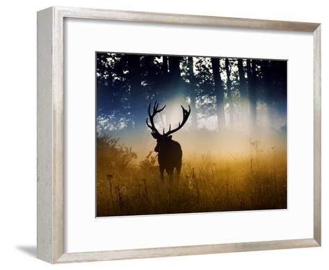 A Red Deer Buck, Cervus Elaphus, Comes Out from the Forest-Alex Saberi-Framed Art Print