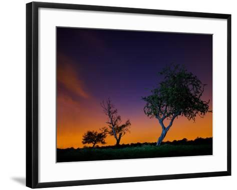 A Tree at Night with an Orange and Purple Sky-Alex Saberi-Framed Art Print