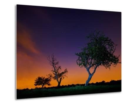 A Tree at Night with an Orange and Purple Sky-Alex Saberi-Metal Print