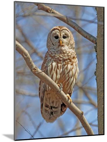 A Barred Owl, Strix Varia, Perched on a Tree Branch-George Grall-Mounted Photographic Print