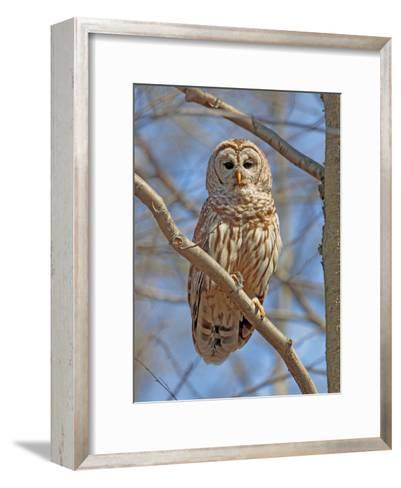 A Barred Owl, Strix Varia, Perched on a Tree Branch-George Grall-Framed Art Print