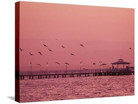 A Flock of Birds Fly around a Fishing Pier During a Pink Sunset-Mike Theiss-Stretched Canvas Print