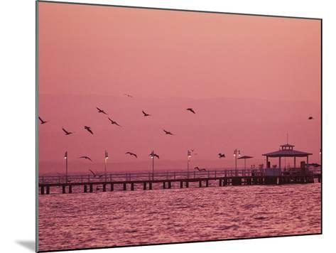 A Flock of Birds Fly around a Fishing Pier During a Pink Sunset-Mike Theiss-Mounted Photographic Print