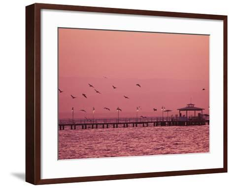 A Flock of Birds Fly around a Fishing Pier During a Pink Sunset-Mike Theiss-Framed Art Print
