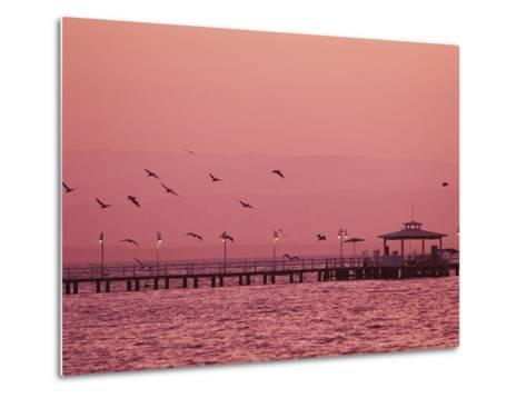 A Flock of Birds Fly around a Fishing Pier During a Pink Sunset-Mike Theiss-Metal Print