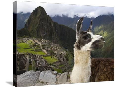 A Llama on a Road Above Machu Picchu-Michael Melford-Stretched Canvas Print