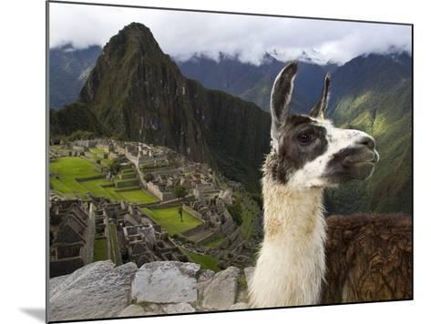 A Llama on a Road Above Machu Picchu-Michael Melford-Mounted Photographic Print