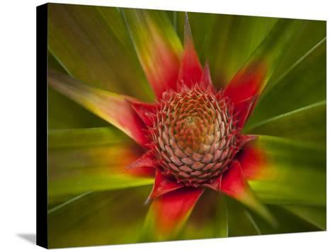 Orquideas Botanical Gardens, in Golfo Dulce-Michael Melford-Stretched Canvas Print