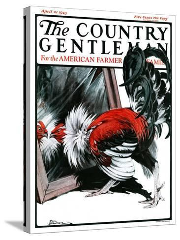 """""""Fancy Rooster in Mirror,"""" Country Gentleman Cover, April 21, 1923-Paul Bransom-Stretched Canvas Print"""