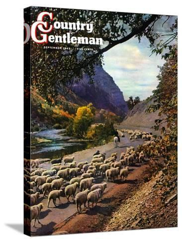 """""""Herding Sheep,"""" Country Gentleman Cover, September 1, 1943-Mike Roberts-Stretched Canvas Print"""