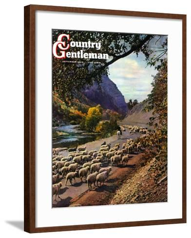 """Herding Sheep,"" Country Gentleman Cover, September 1, 1943-Mike Roberts-Framed Art Print"