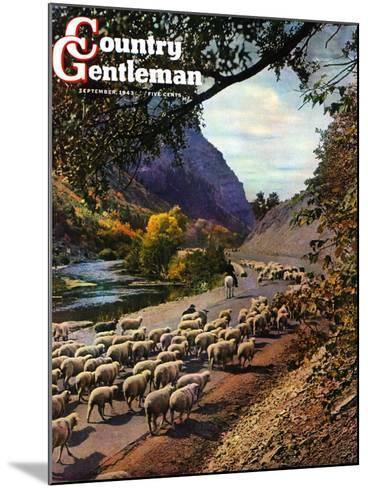 """""""Herding Sheep,"""" Country Gentleman Cover, September 1, 1943-Mike Roberts-Mounted Giclee Print"""