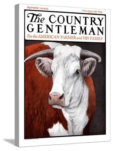 """""""Head of Steer,"""" Country Gentleman Cover, September 22, 1923-Charles Bull-Stretched Canvas Print"""